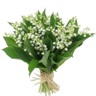 Lily of the Valley of the 1st May